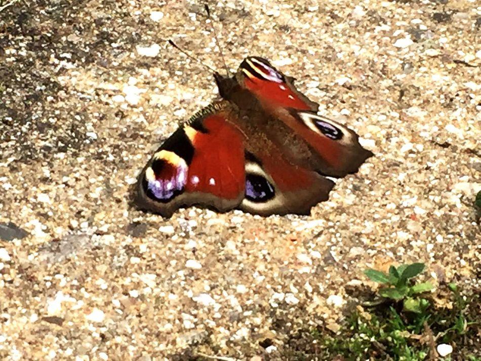 Butterfly, summer, wings, Chillin, Colourful, Summertime Summer Summer Views