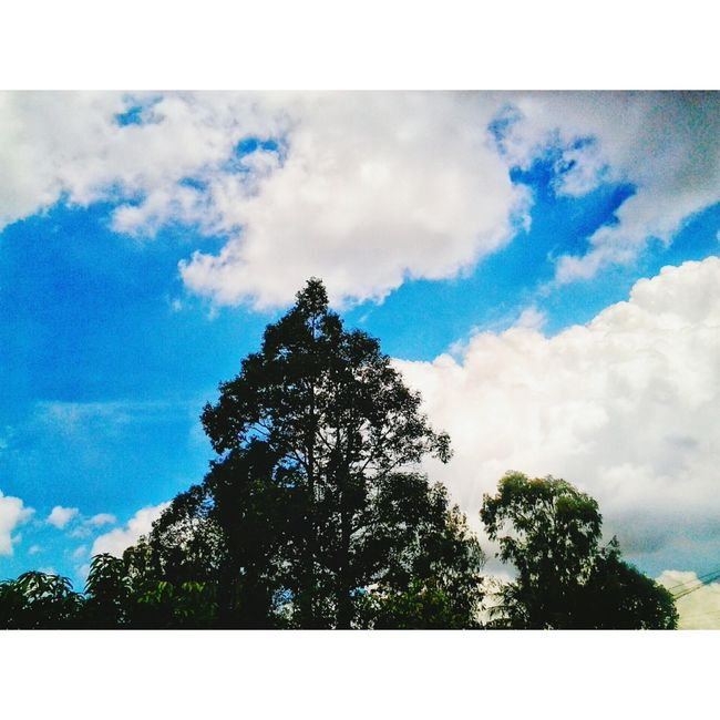 Photo by me Tree Low Angle View Blue Sky Auto Post Production Filter Growth Cloud - Sky Tranquility Tranquil Scene Nature Transfer Print Scenics Beauty In Nature Cloud Outdoors Cloudy Day Tall - High No People Solitude