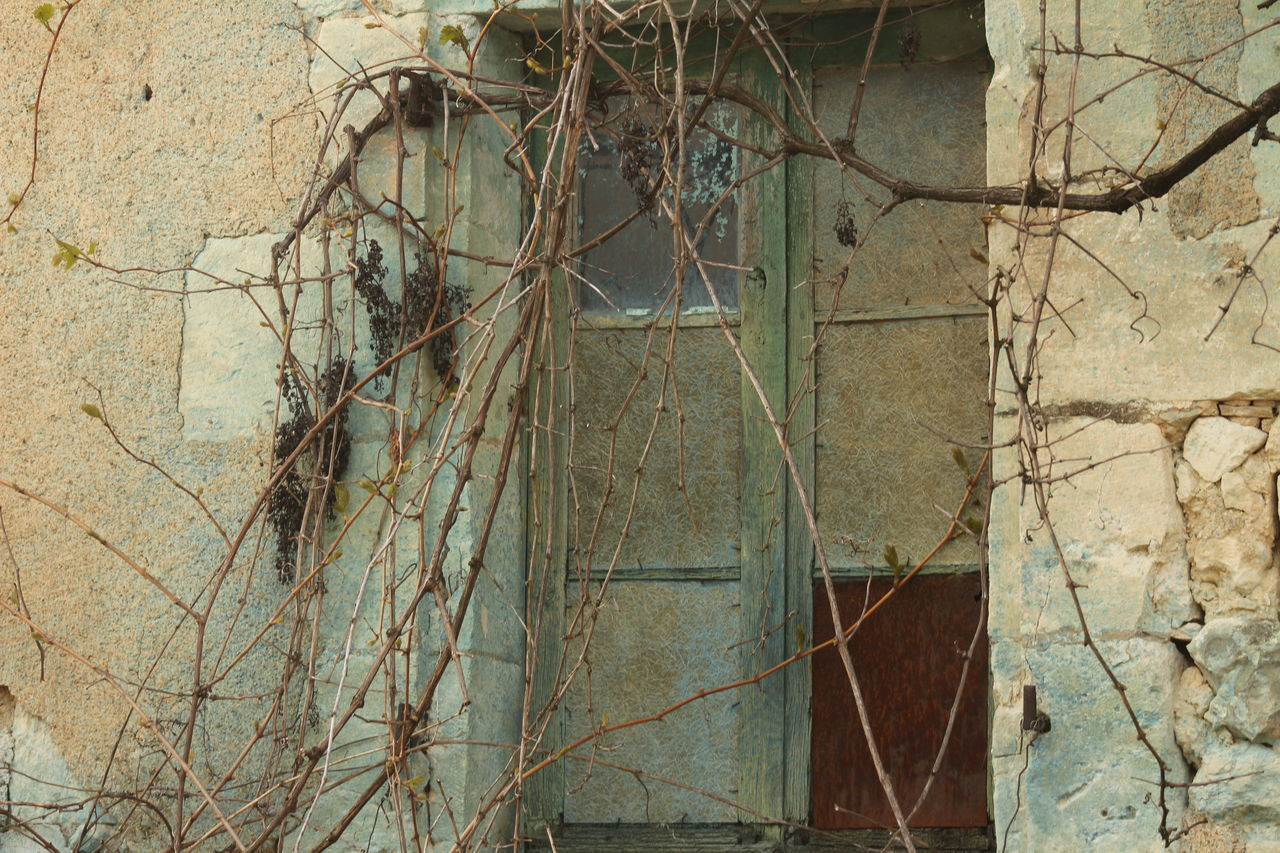 Architecture Bare Tree Branch Building Exterior Built Structure Close-up Damaged Day Dead Plant Nature No People Outdoors Plant Tree