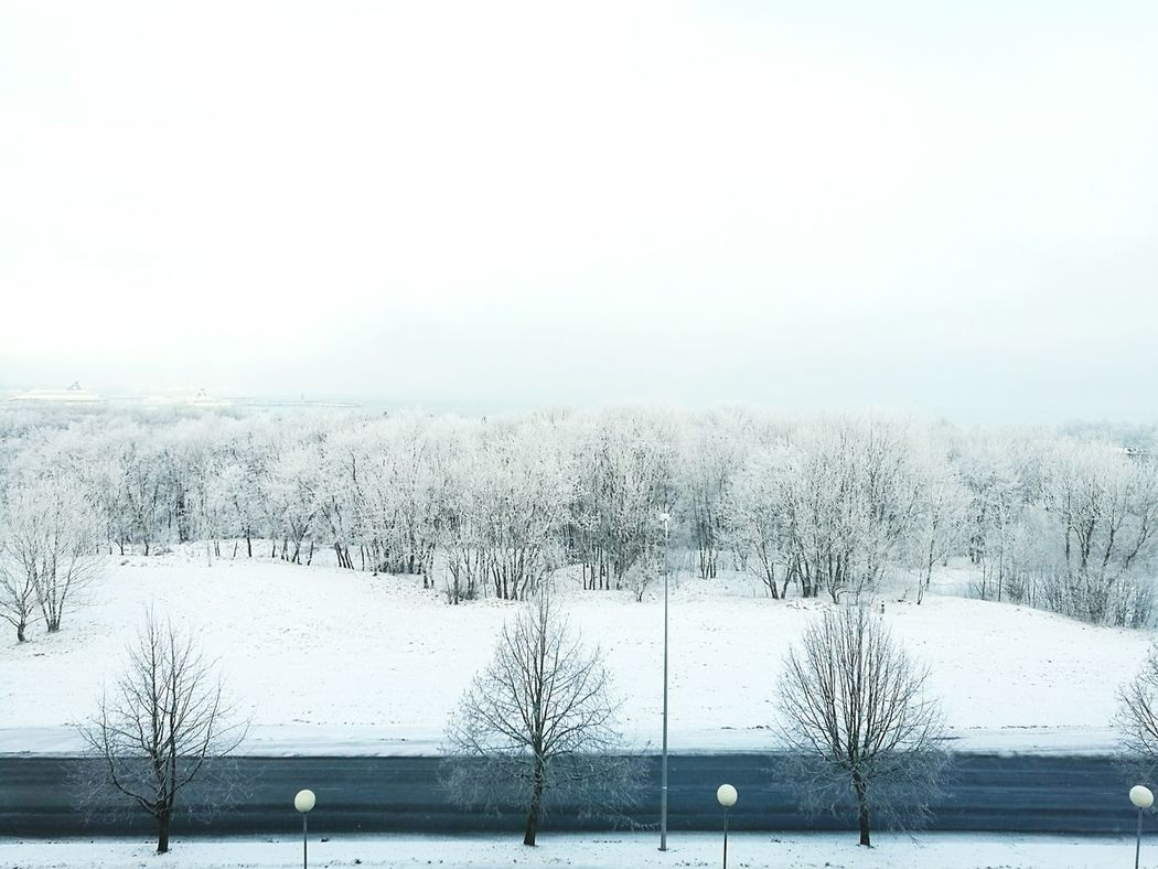 Frosty Weather Frosted Forest Snowy Forest Snowy Trees Winter Trees White Trees Frosted Tree High Angle View Frosty Mornings Calming View
