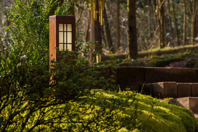 Garden Lamp in Zen Buddhist Temple Kosanryumon-ji. Beauty In Nature Buddhism Buddhist Temple Cha Do Front Or Back Yard Garden Garden Lamp Green Green Color Nature No People Plant Stairs Tea Ceremony Tranquil Scene Tranquility Tree Zen in Weiterswiller, Alsace, France Showcase June