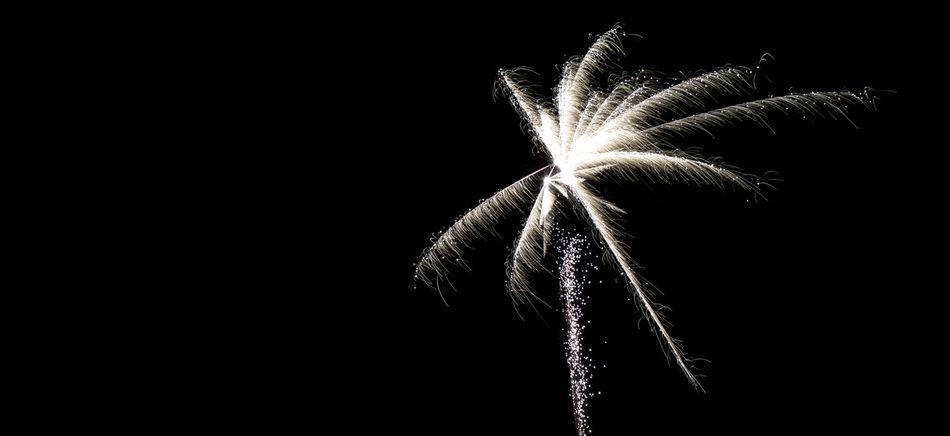 Bunt Celebrate Explosion Explosion Of Color Explosions In The Sky Feiern Feuerwerk Feuerwerksfotografie Fireworks Fireworksphotography Long Exposure Nachtfotografie Night Photography Nightphotography Silvester Weiss White