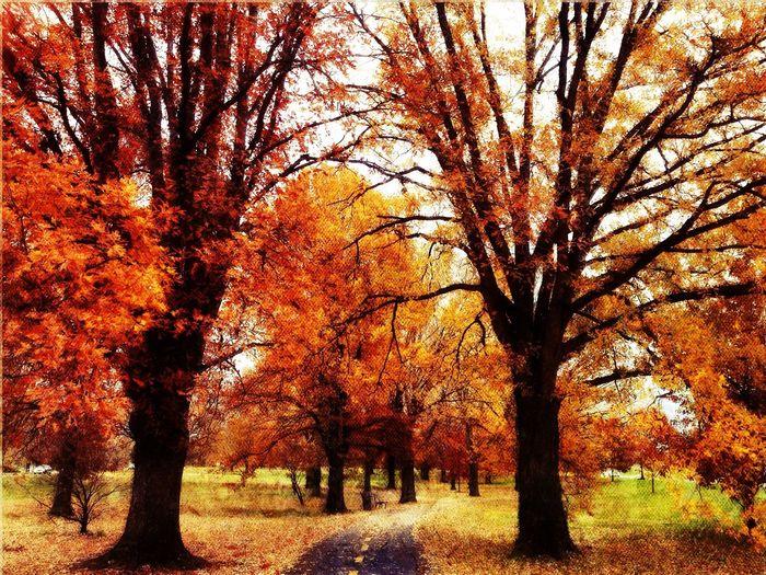Fall Colors at Lady Bird Johnson Memorial Park Fall Colors