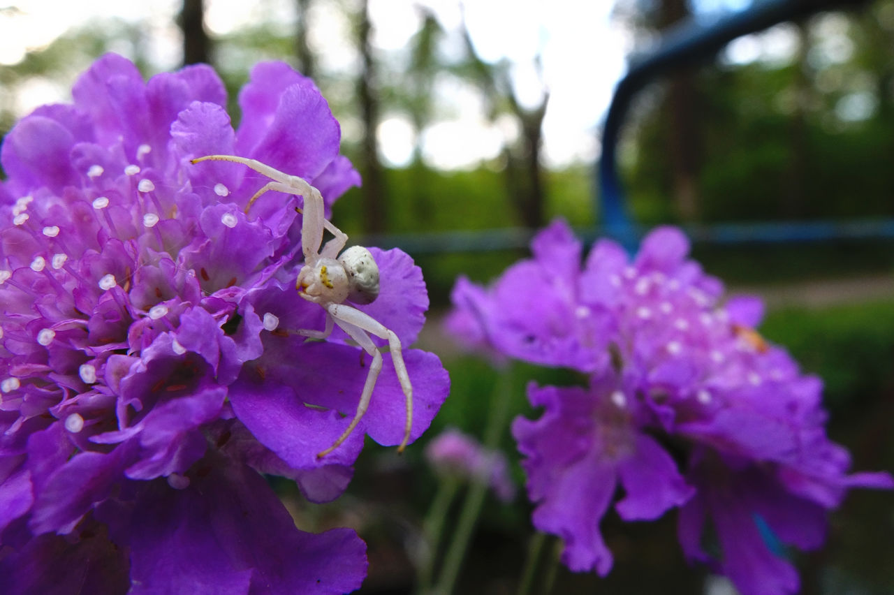 flower, purple, insect, one animal, animals in the wild, animal themes, nature, petal, growth, beauty in nature, fragility, freshness, plant, focus on foreground, day, outdoors, bee, pollination, animal wildlife, no people, close-up, flower head, blooming, buzzing