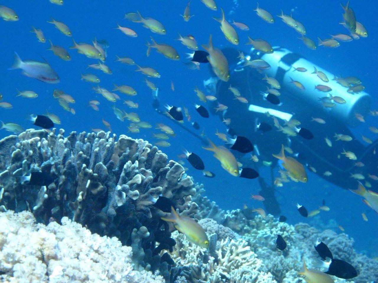 SCUBA Scubaph Scuba Diving