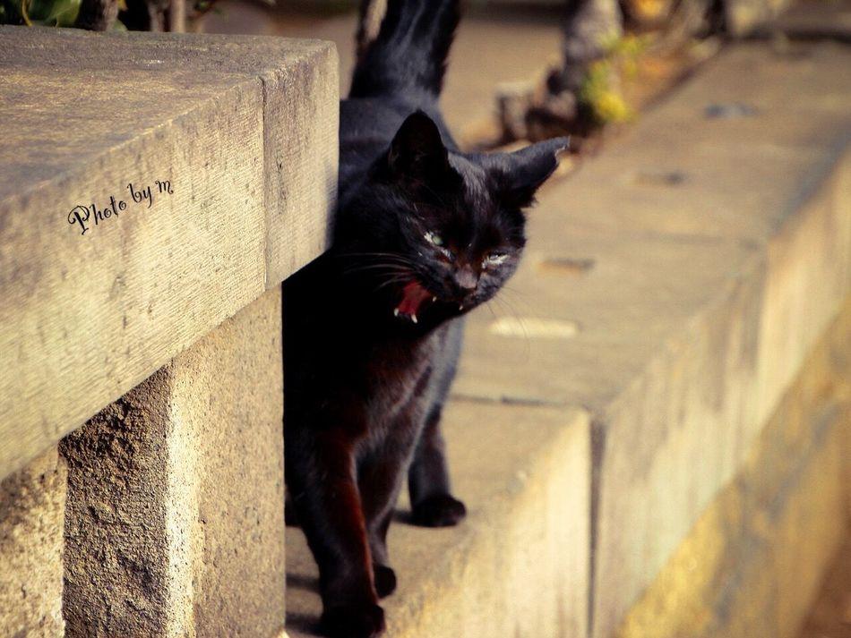 Cat Cat♡ Stray Cat 野良猫 猫 Animal 黒猫Love Cat Lovers Black Cat Photography