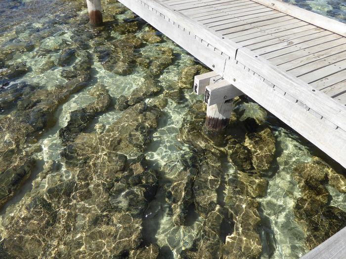 Enviornmental Awareness Stromatolites Stromatolites Cyano Bacteria Tourism Tourists UNESCO World Heritage Site Wooden Boardwalk World Heritage Site