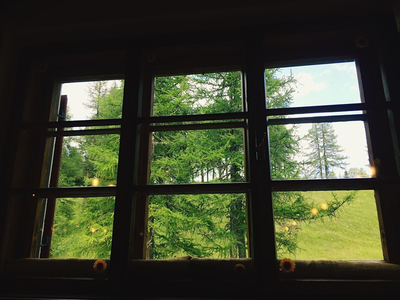 window, indoors, glass - material, tree, day, no people, green color, home interior, nature, growth, architecture, close-up