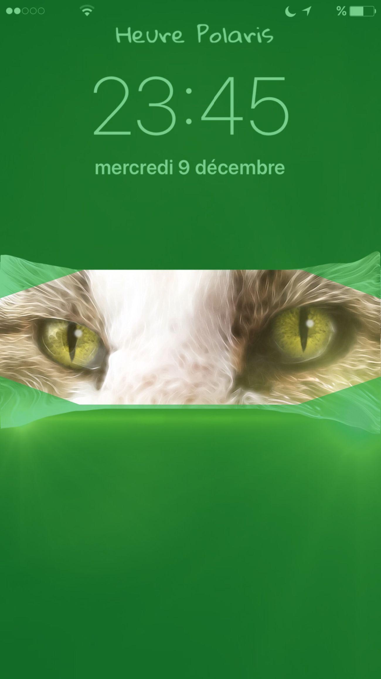 23H45.... HEURE POLARIS Hour Time Heure Clock Mon Ami Le Chat Chat Cat Cats Cat♡ Cat Eyes Yeux De Chat Les Yeux De Chat