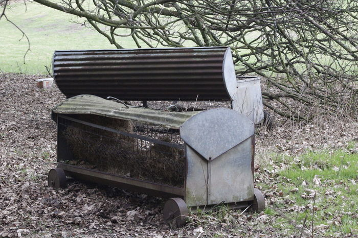 Feeding time! Animal Feeder Corrugated Iron Countryside Day Nature No People Old Farm Equipment Outdoors Tree