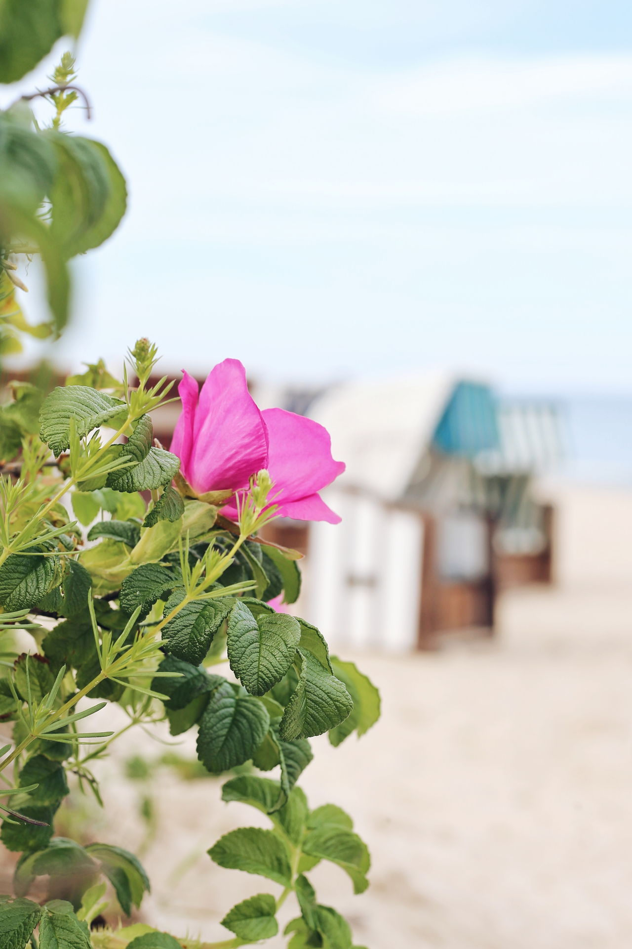 Beach Sea Sand Water Summer Pink Color Outdoors Vacations Nature Day Horizon Over Water No People Tranquility Beauty In Nature Green Color Sky Travel Destinations Leaf Flower Close-up Vacations Freshness Pastel Colored