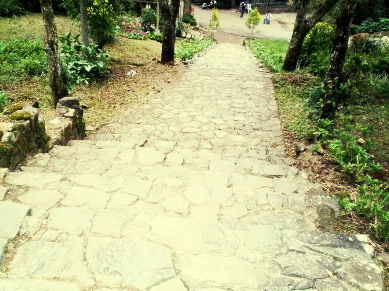 the way forward, footpath, nature, day, tree, walkway, growth, outdoors, no people, plant, beauty in nature