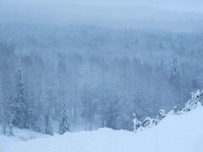 Россия, Архангельская область Snow Winter Cold Temperature Blue Close-up No People Snowing Day Nature Outdoors