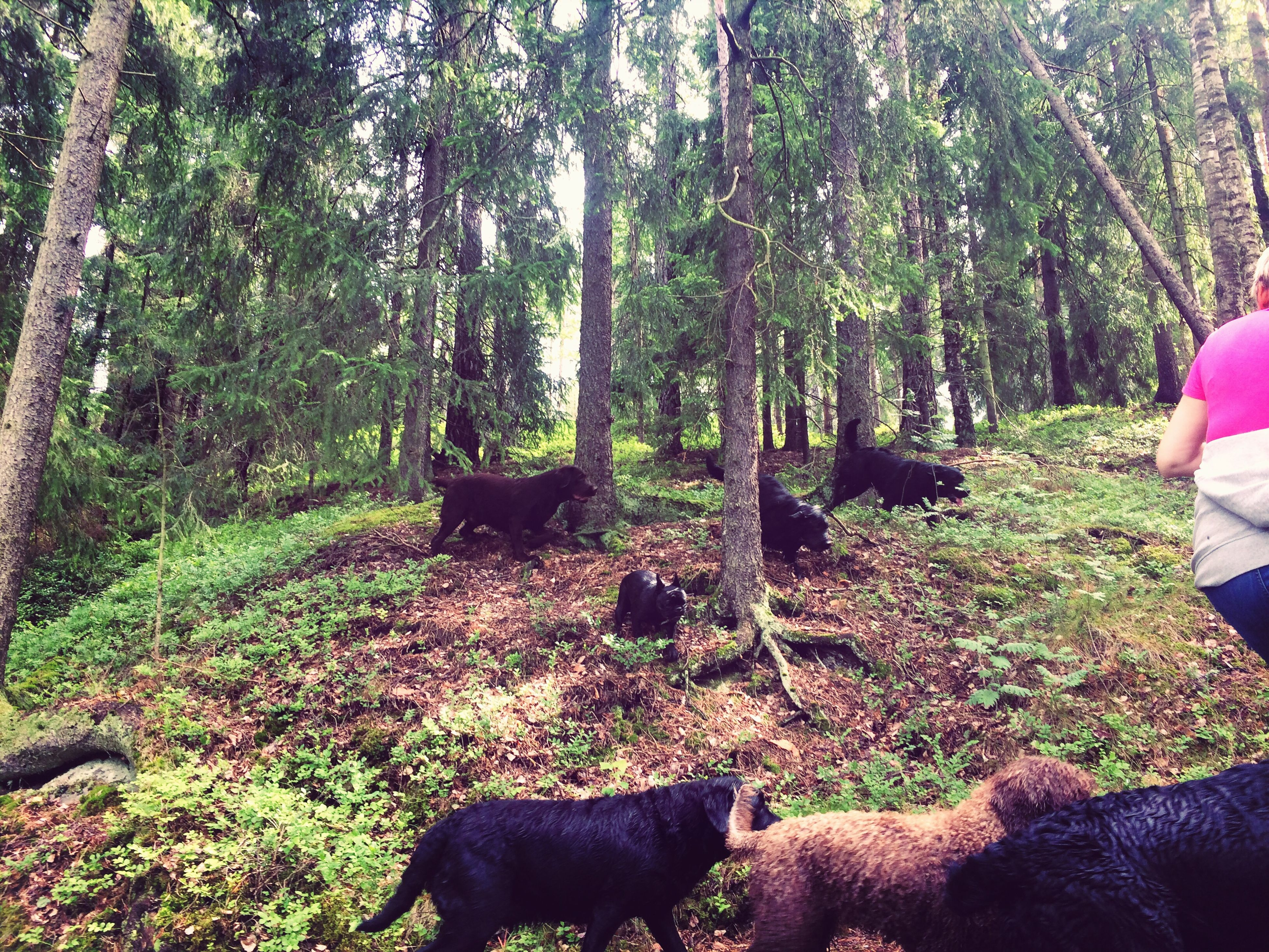 domestic animals, tree, mammal, animal themes, pets, one animal, dog, forest, growth, relaxation, nature, plant, tree trunk, green color, grass, day, standing, sitting