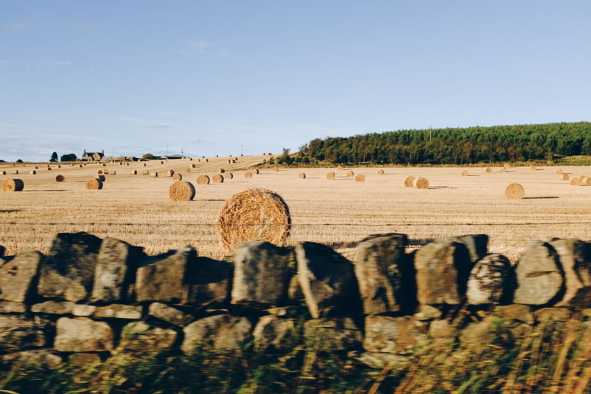 Agriculture Beach Day Farm FujiX100T Hay Large Group Of Animals Motion Motion Blur Motion Capture Nature No People Outdoors Sand Scotland Sky