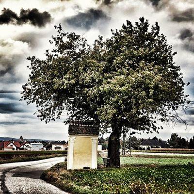 Tree at the Street