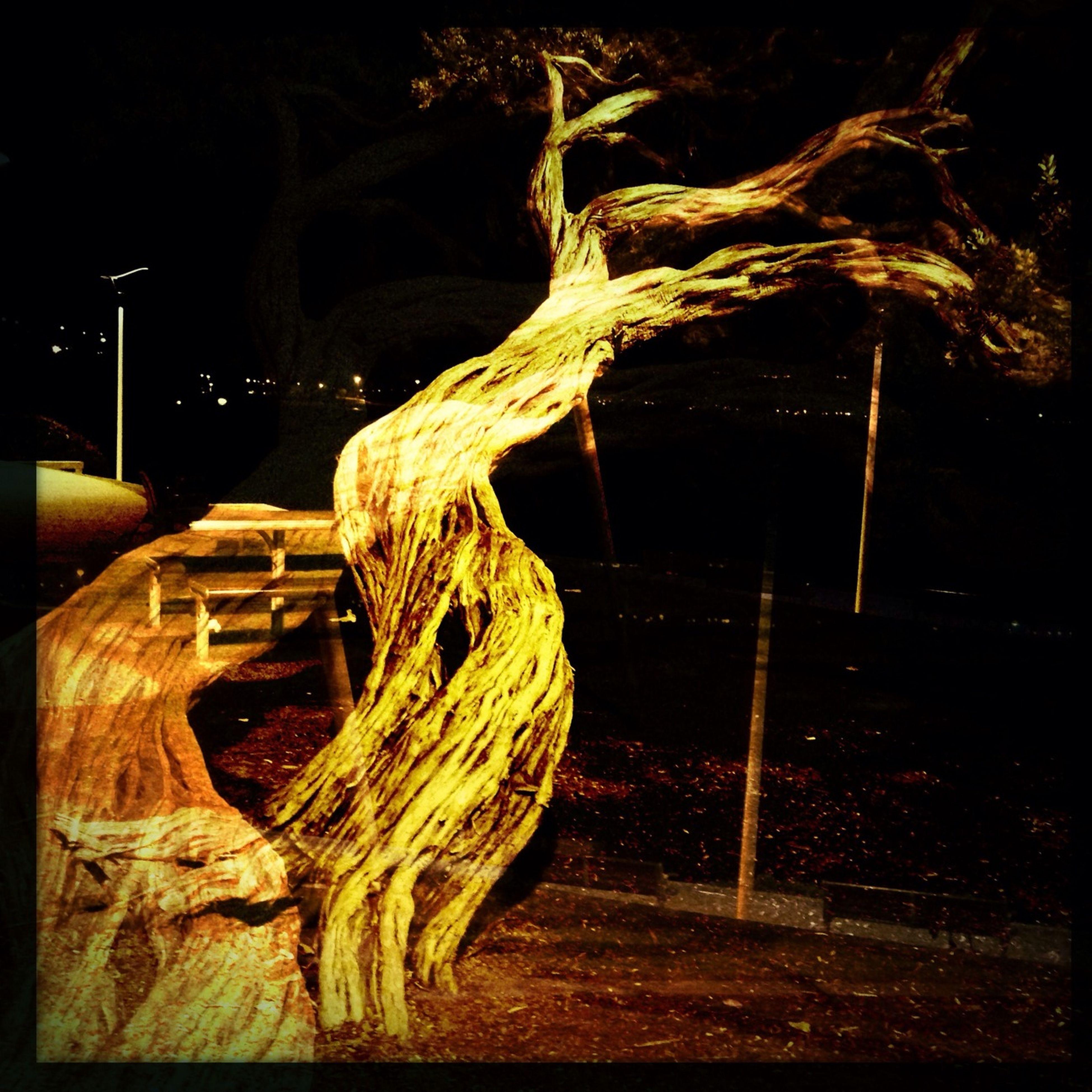 night, wood - material, illuminated, tree, outdoors, no people, dark, firewood, wood, field, auto post production filter, log, fence, close-up, nature, bare tree, tree trunk, dry, light - natural phenomenon, sunlight