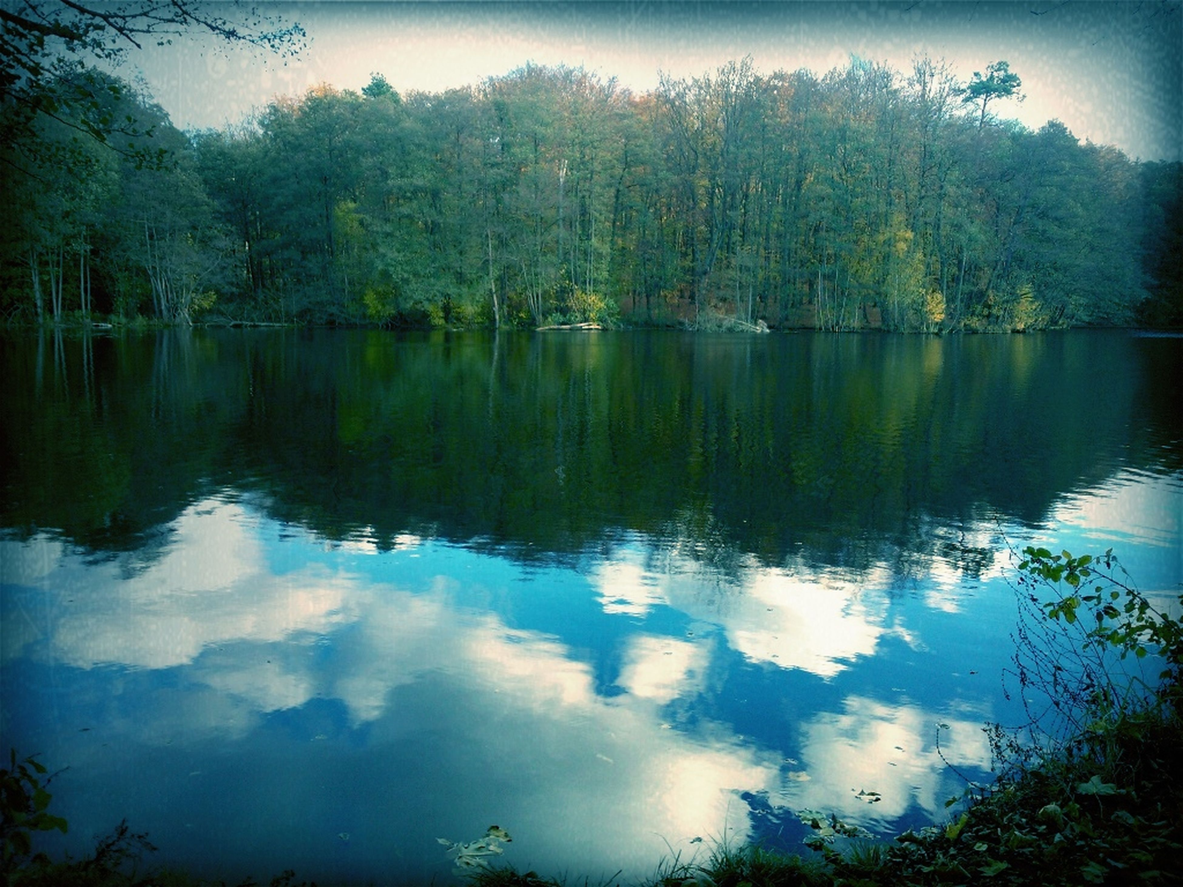 reflection, tree, water, lake, tranquil scene, tranquility, scenics, beauty in nature, sky, nature, waterfront, idyllic, standing water, forest, calm, outdoors, no people, non-urban scene, day, growth