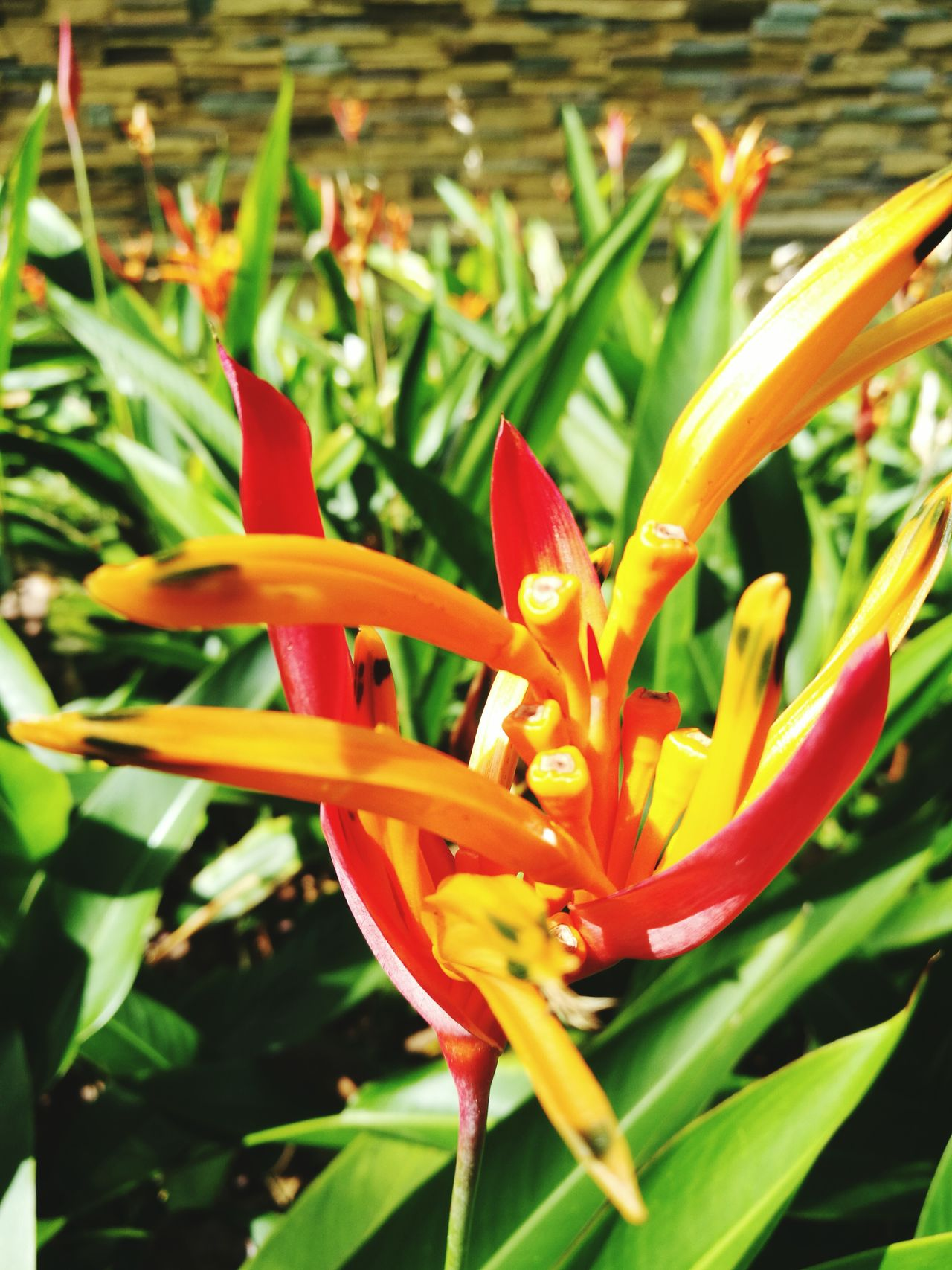 Flower Growth Plant Nature Beauty In Nature Freshness Flower Head Close-up Tropical Flower No People Day Outdoors Leica_camera Leicalens Huaweip9photos Nature Beauty In Nature