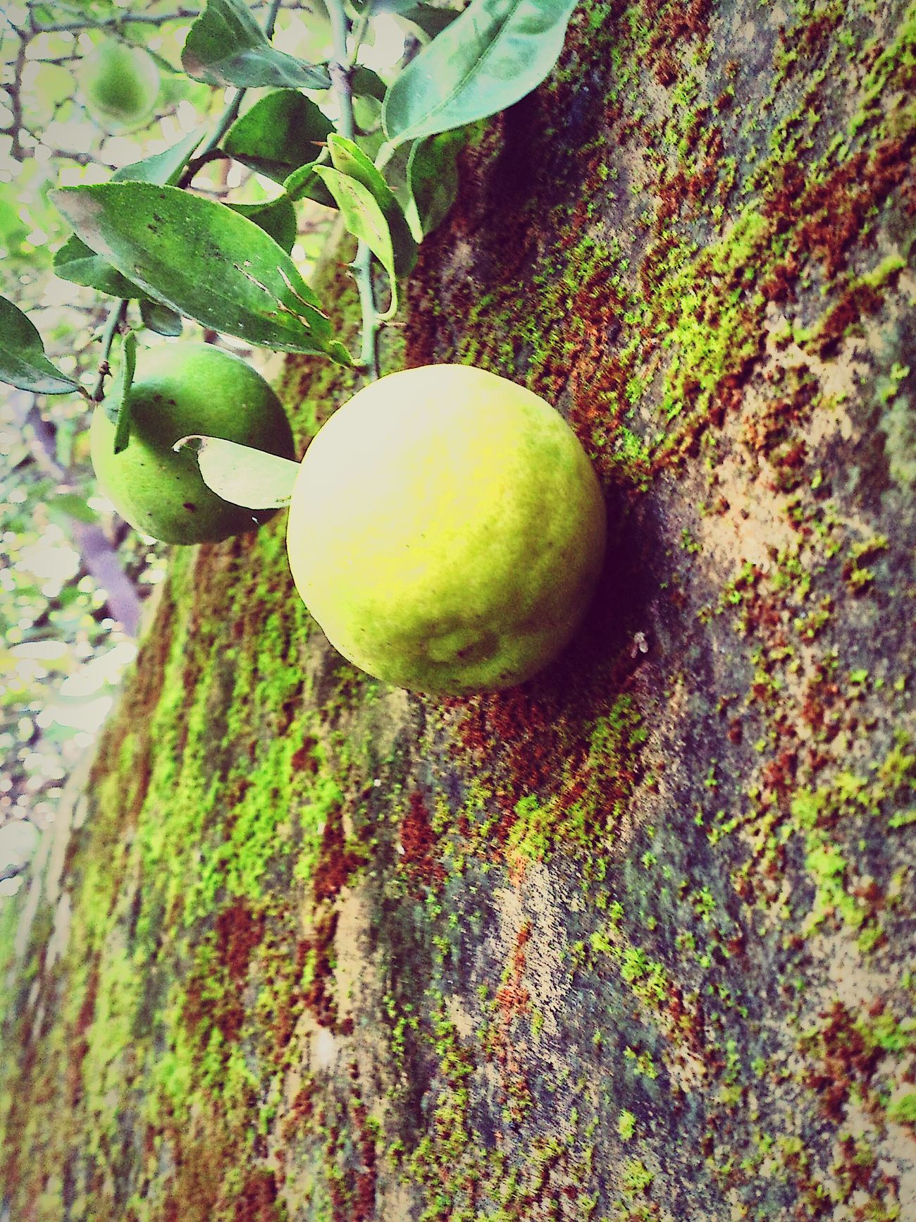 Violet By Motorola Nature Photography Green Lemon Lime By Motorola Limegreen Real Life