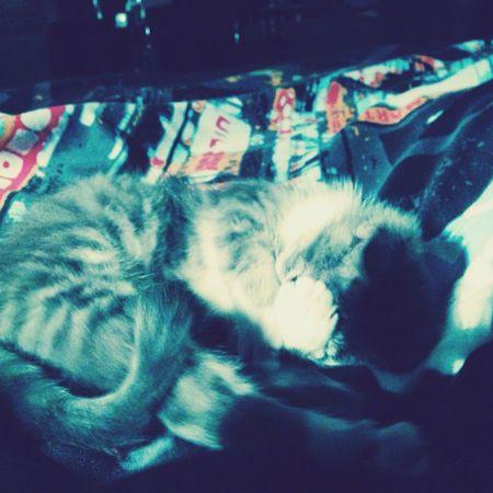 Mon amour de chat.