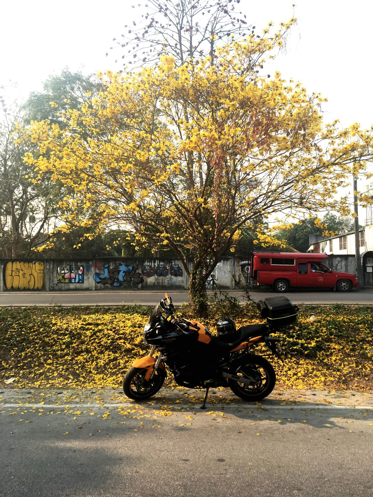 Summer flower Yellow Flower Tree Motorcycle Road Outdoors Day No People