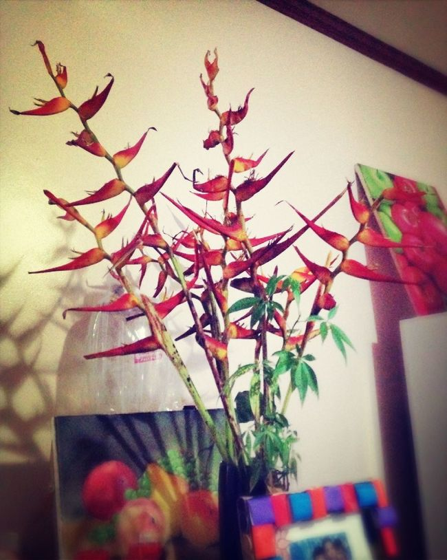 Flowers Birdofparadise