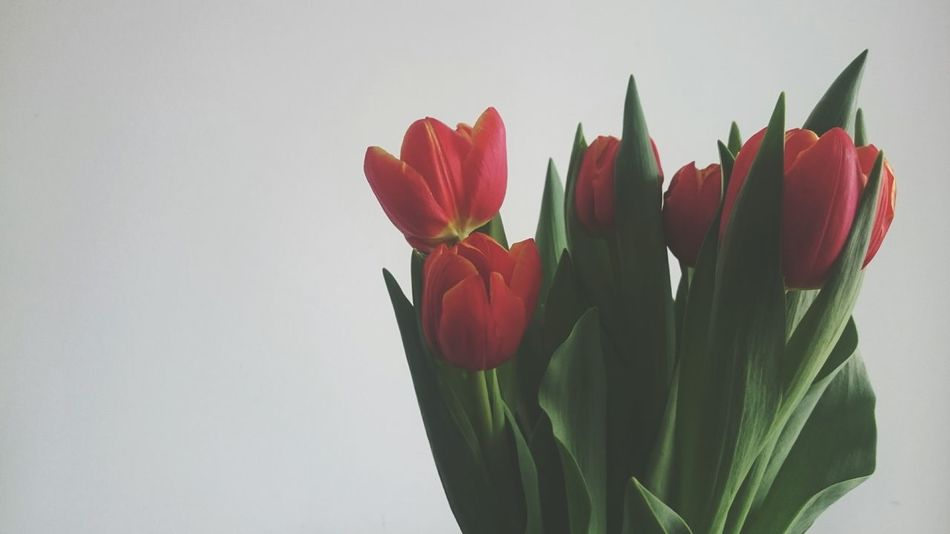 Red Red Flower Tulips Spring Interior Flowers Flower Tulip Green Green And Red Natura Morta No People Detail Table Mothersday Spring Flowers Springtime Showcase March Interior Views Easter Ready How Do We Build The World? Pastel Power Learn & Shoot: Balancing Elements Urban Spring Fever Things I Like