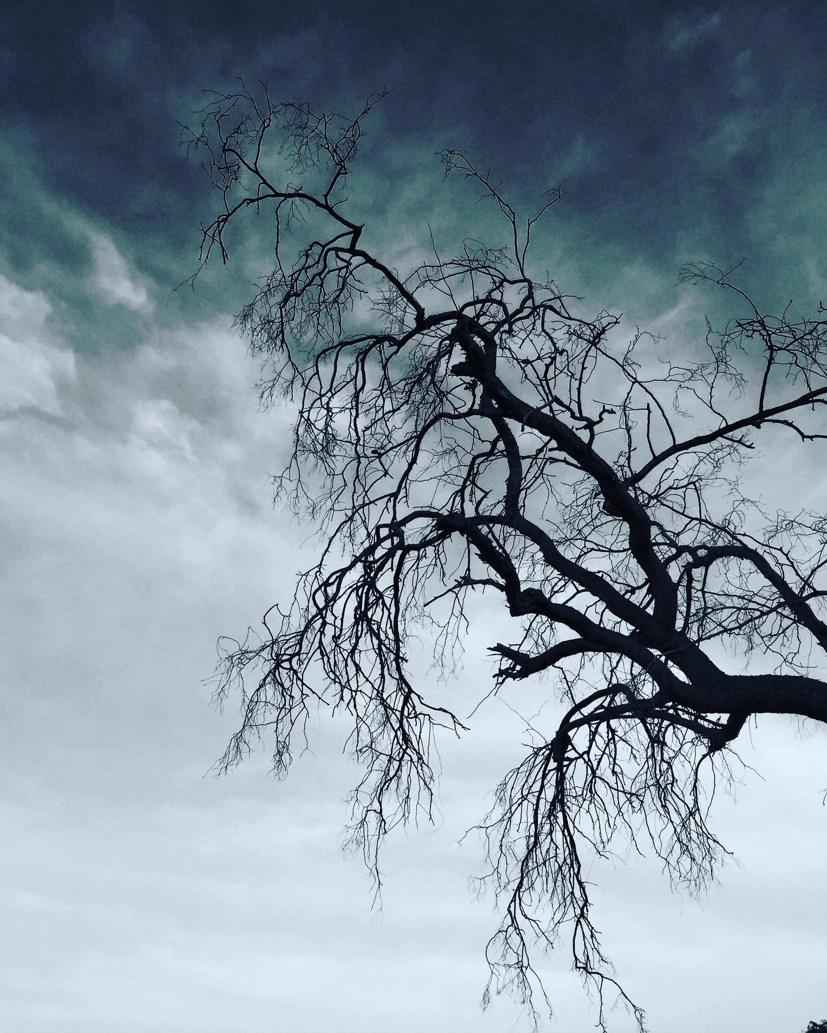 bare tree, tree, branch, low angle view, sky, cloud - sky, day, no people, nature, outdoors, beauty in nature, animal themes, animals in the wild, bird, dead tree, bird of prey