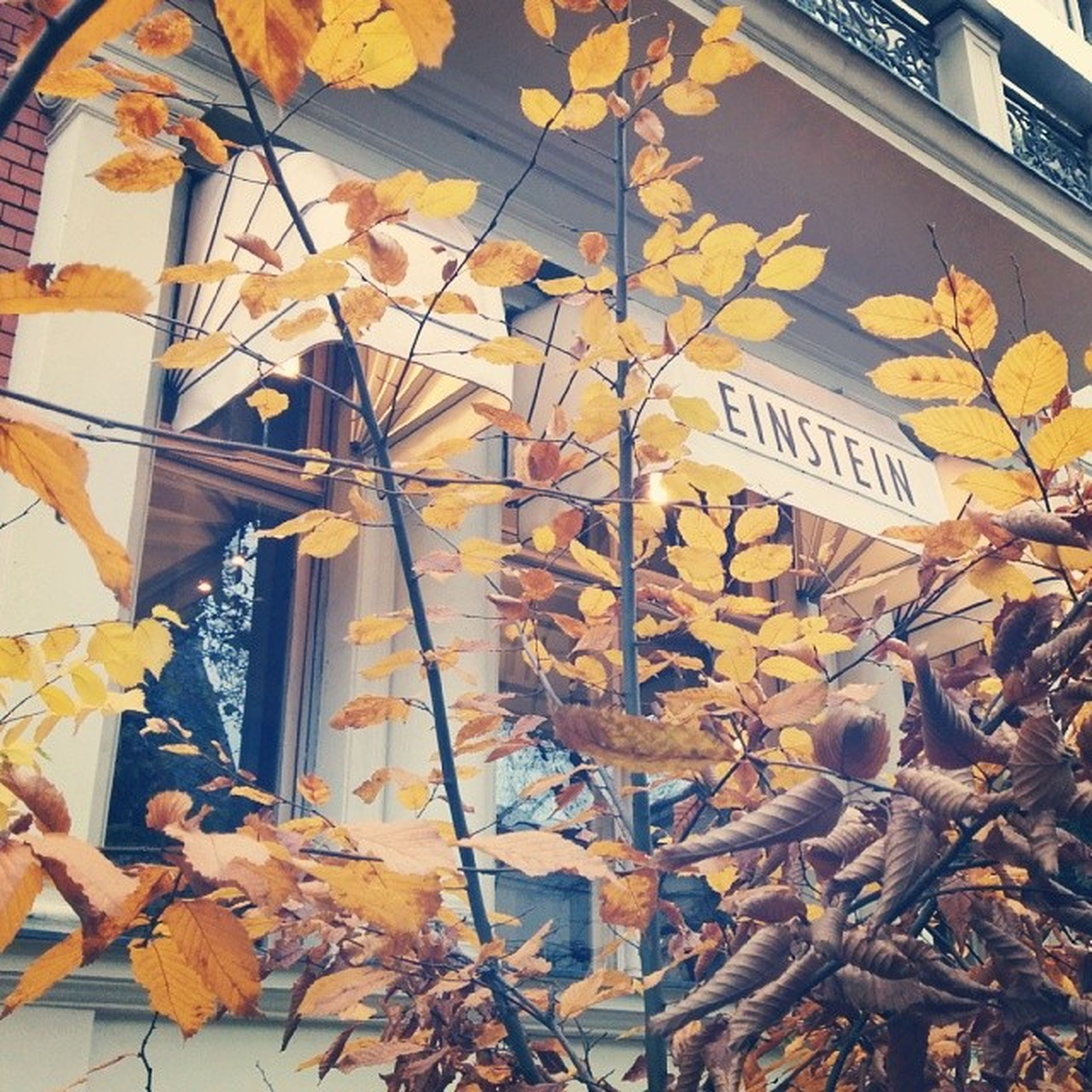 built structure, text, architecture, communication, wall - building feature, graffiti, building exterior, western script, yellow, leaf, low angle view, wall, autumn, day, outdoors, building, creativity, no people, art, window