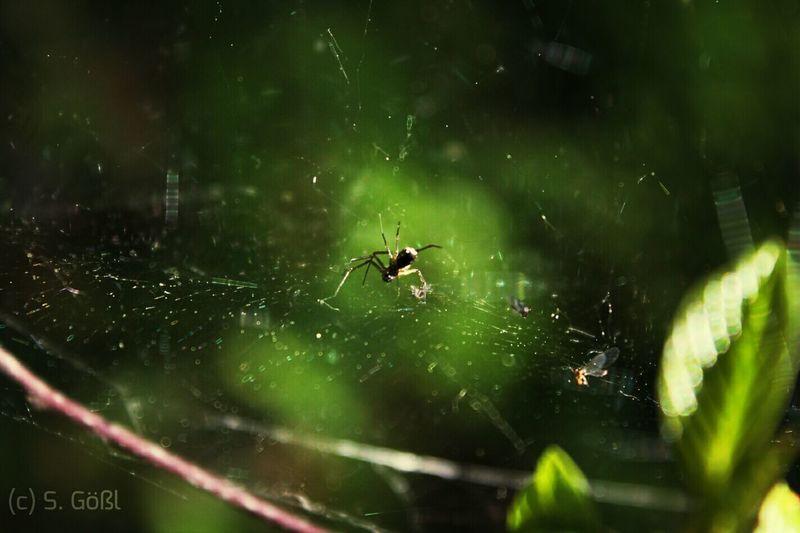 Spider Arrac Nature Scary Makro EyeEm Nature Lover Eyem Nature Lovers  Dog Walk So Natural Green