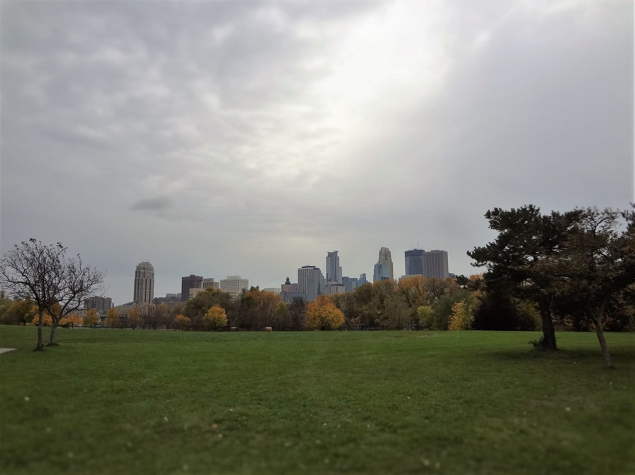 Shot of downtown Minneapolis from Boom Island. Architecture Building Exterior Buildings Built Structure City Cityscapes Close-up Cloud - Sky Day Fall Fall Beauty Grass Minnepolis Minnesota Nature No People Outdoors Sky Tabphotography Tree