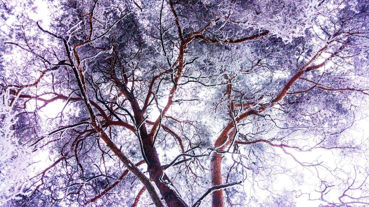 Tree Nature Beauty In Nature Outdoors Winter Cold Temperature Growth Reaching Out Reach 4 The Sky Disorder Nature Blowout Blastoff Chaos HotCold Wired