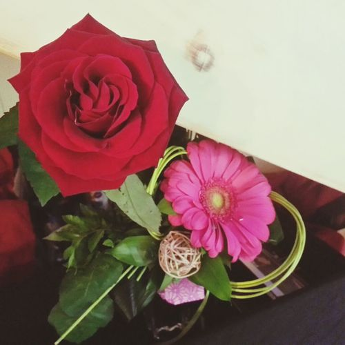 Flowers Red Rose Pink Flower Beautiful