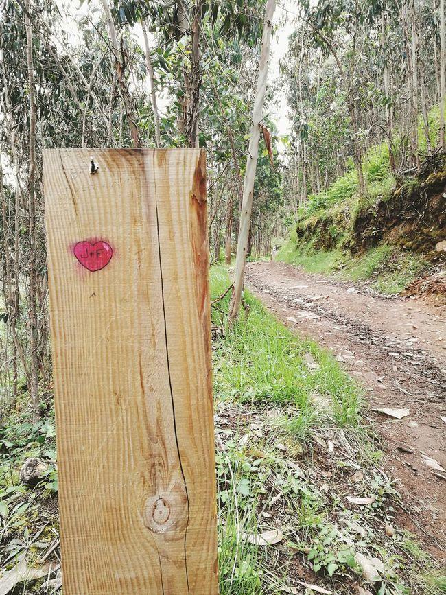Wood - Material Plant Grass Outdoors Nature Tree No People Heart Passadiços Do Paiva Caminho Caminhada