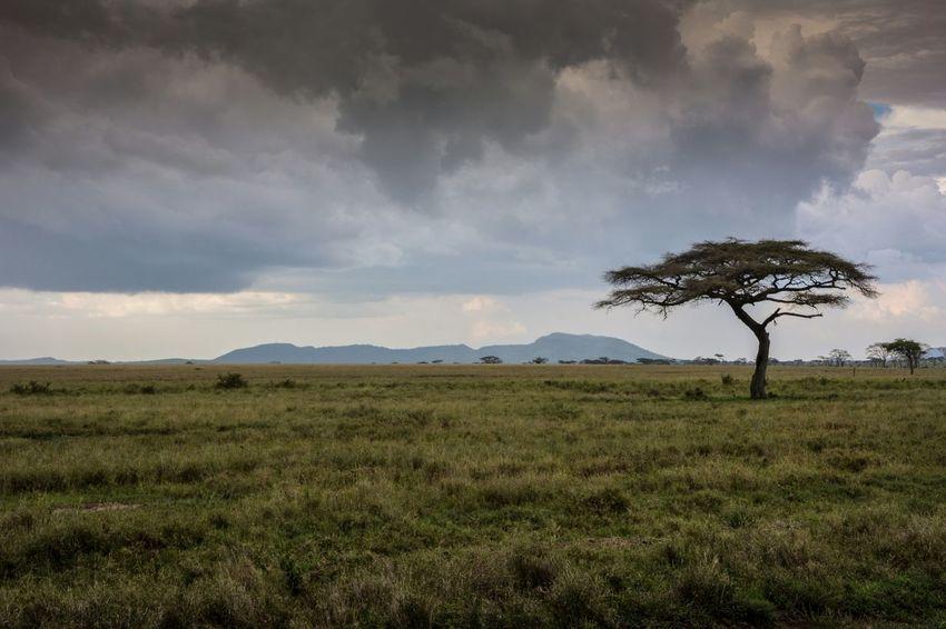 Serengeti National Park, Tanzania, Africa Taking Photos Check This Out Enjoying Life Hello World Travel Photography Tanzania Travel Africa Taking Photos Tourist