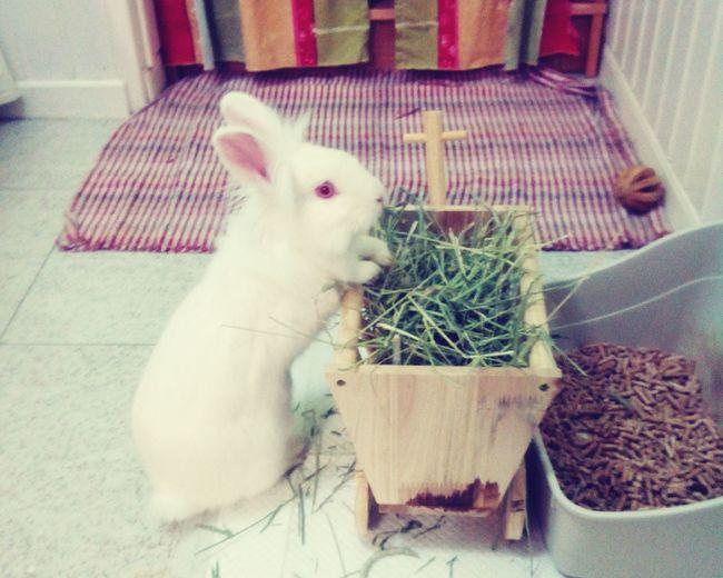 Pets Corner Rabbit Rabbit ❤️ Mr Rabbit Conejito Conejo ConejoLover Cute Rabbit