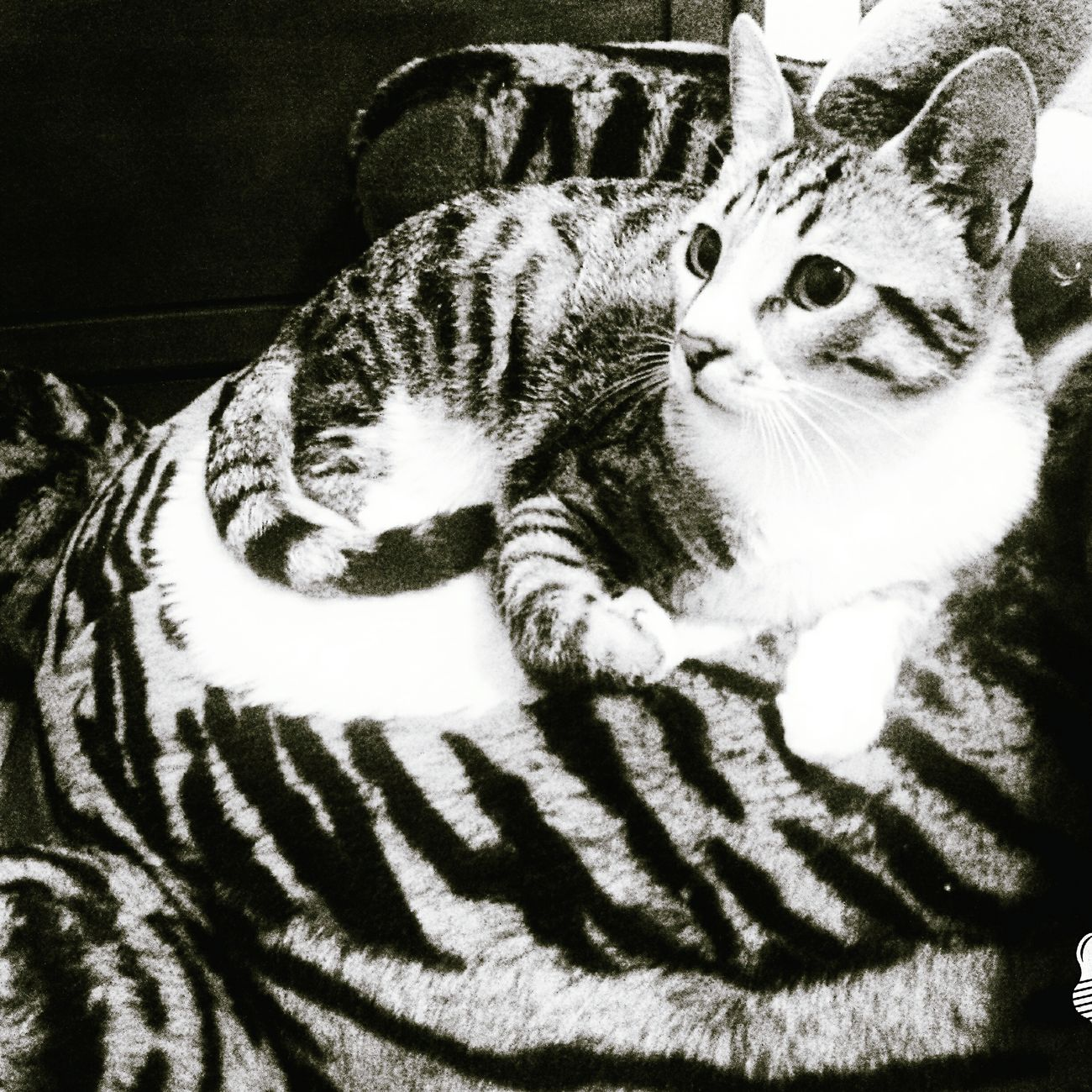 My Cat I LOVE HIM♥ He Is Cute Tiger