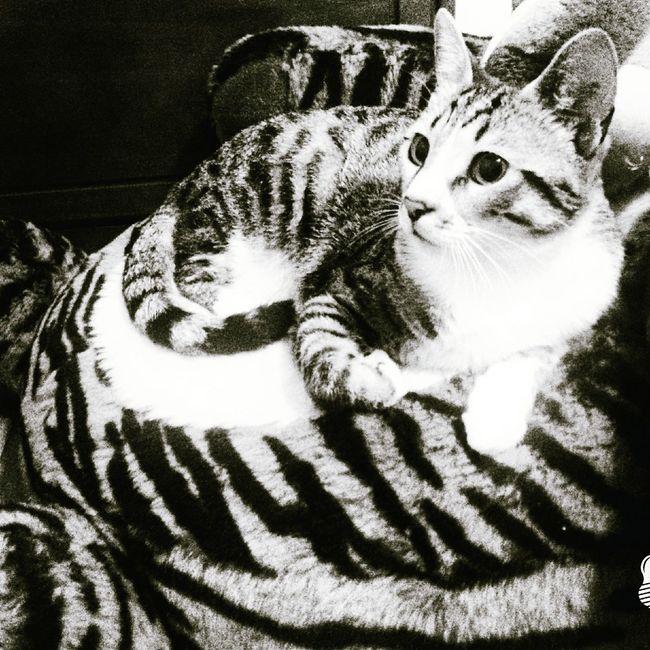 My Cat I LOVE HIM♥ He Is Cute Tiger