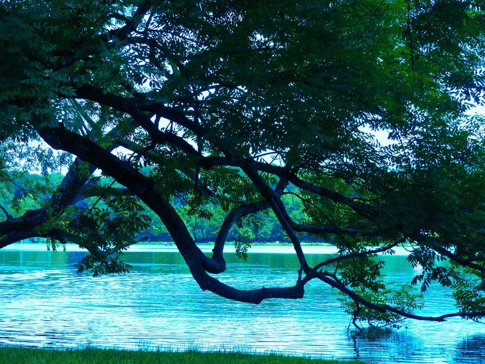 Beauty In Nature Imperfectly Perfect Nature Silent Water Tranquility Tree Trees By The Lake Water