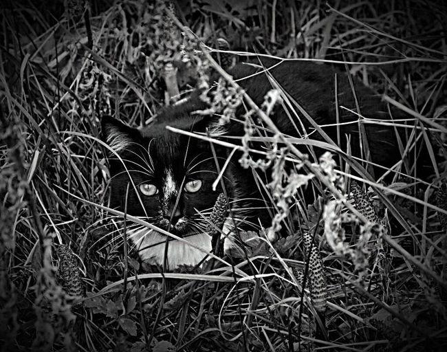 Cat Kitty Nikond7200 Blackandwhite Blackandwhite Photography