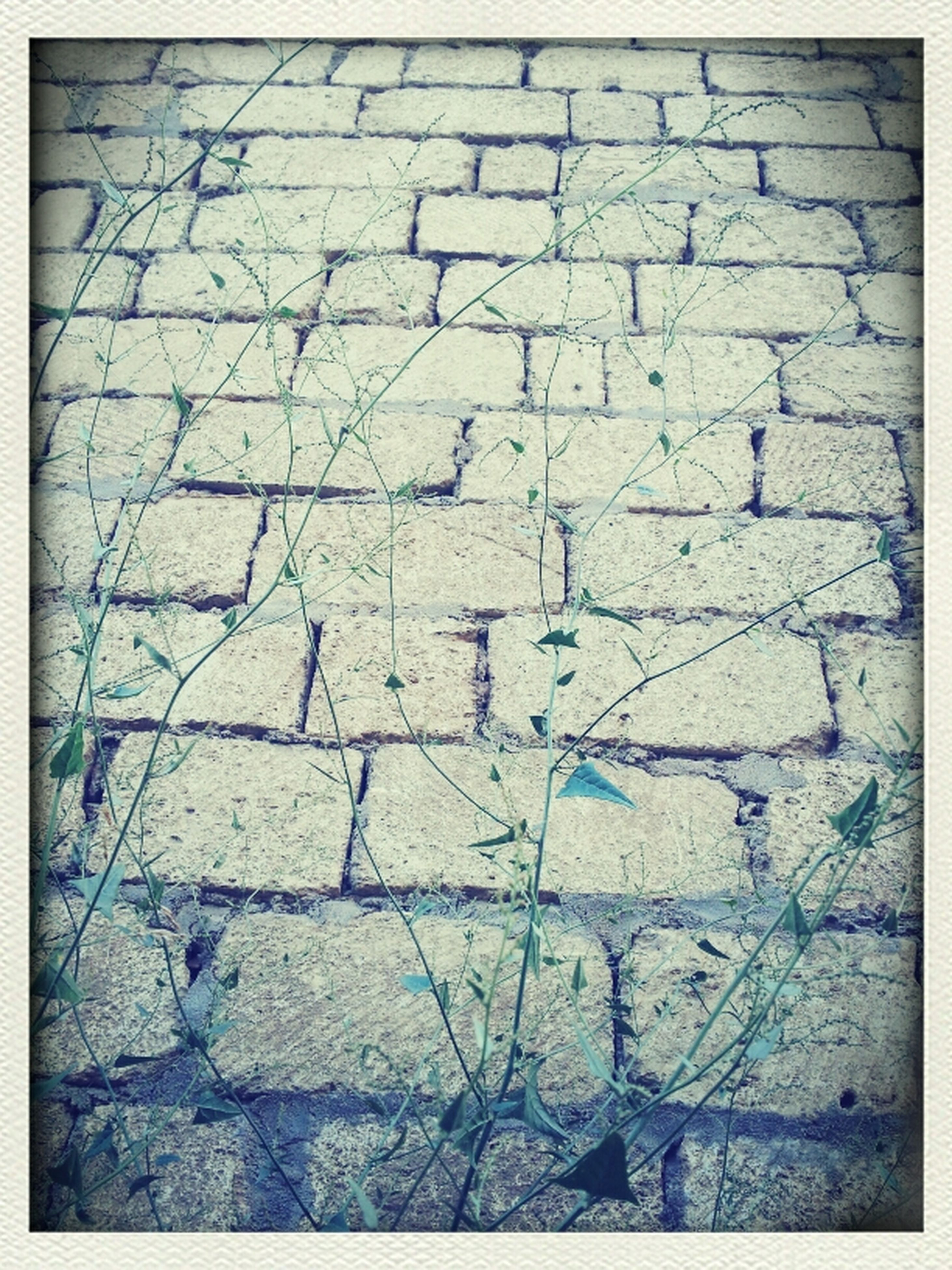 transfer print, full frame, auto post production filter, backgrounds, textured, pattern, wall - building feature, high angle view, close-up, brick wall, cobblestone, no people, outdoors, day, cracked, brick, built structure, wall, rough, paving stone