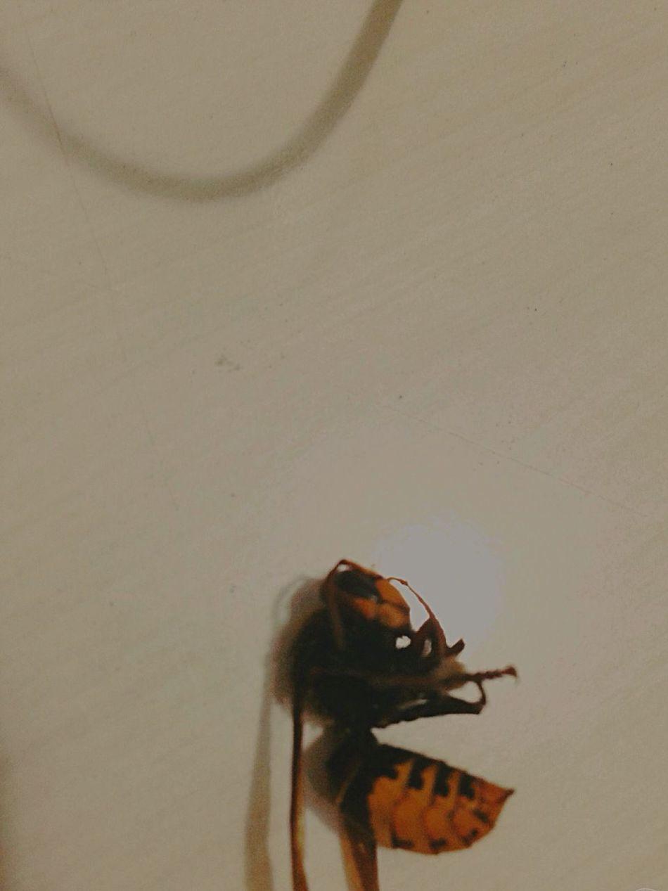 Bee 🐝 Died Amazing Home Kucukmisafirimiz