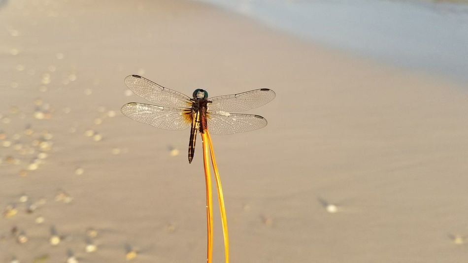 EyeEm Selects Insect Dragon Fly Scenics No People Beauty In Nature Vacations Sand Outdoors Summer