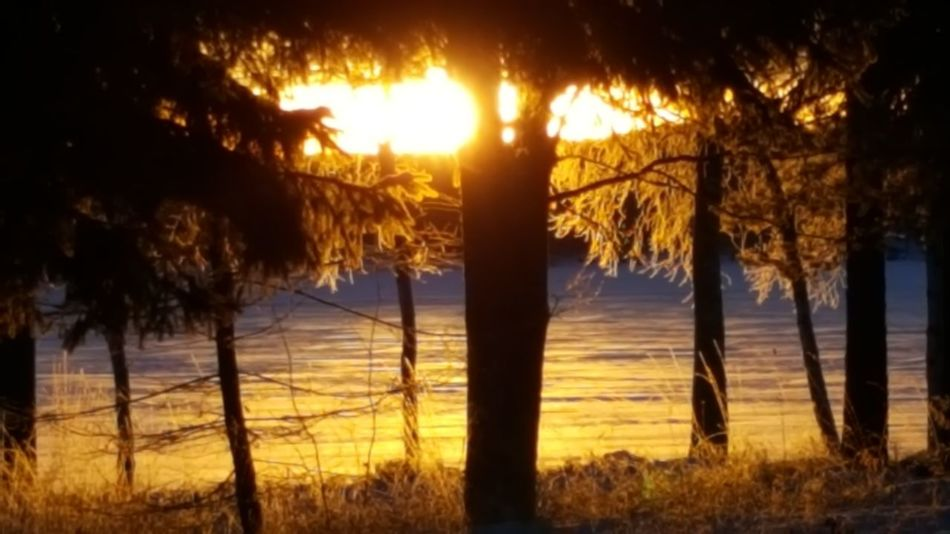 Blazing Sunrise ☉ Have a lovely Sunday 💛 Tree Sunrise Beauty In Nature Outdoors Snow No People Sky Scenics Tranquil Scene Silhouette Landscape Day Sweden Dalarna Scandinavia Nature Forest Ilovesweden Light Illuminated Lake Frozen Lakeside Ice View