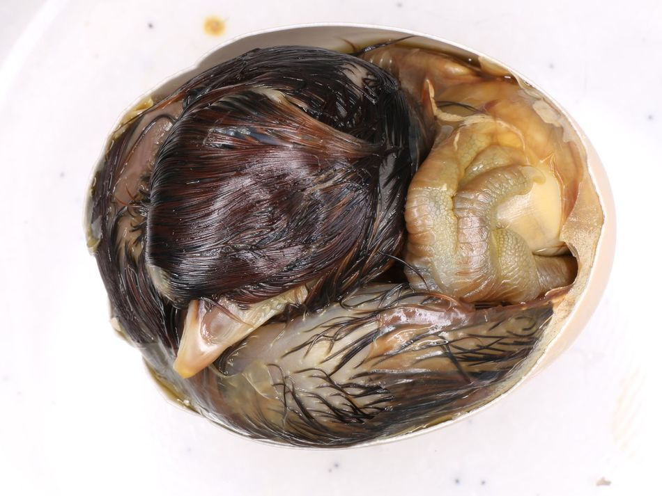 embryo Chick Absorb Birds Chick Childhood Corpse Development Die Egg Eggshell Embryo Food Hatch Poultry