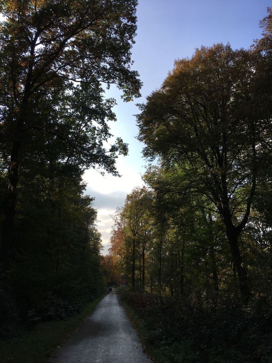 Tree The Way Forward Nature Growth Beauty In Nature Road Day Tranquility No People Scenics Outdoors Sky