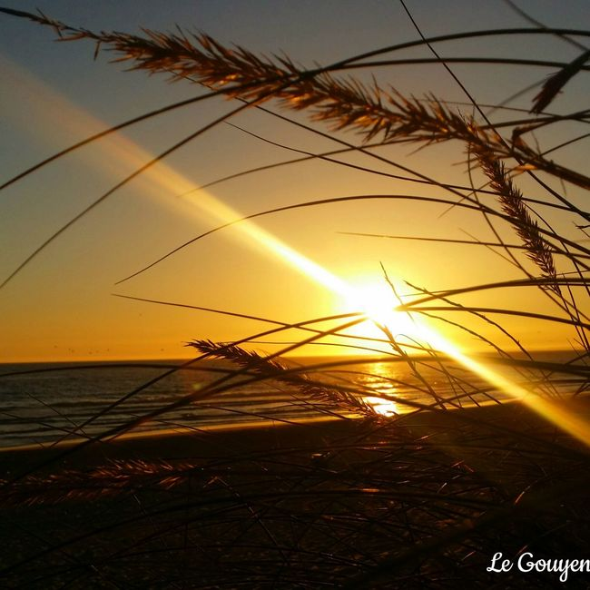 Sunset Sunset_collection Sunlight Summer Sun_collection Natureza Natura Sunrise_sunsets_aroundworld Sunsets Sunsetlover Sun Sunsetporn Praia Plage Beach Beachphotography Beachlife Beachlovers Beach Sunset Beachview Beachtime