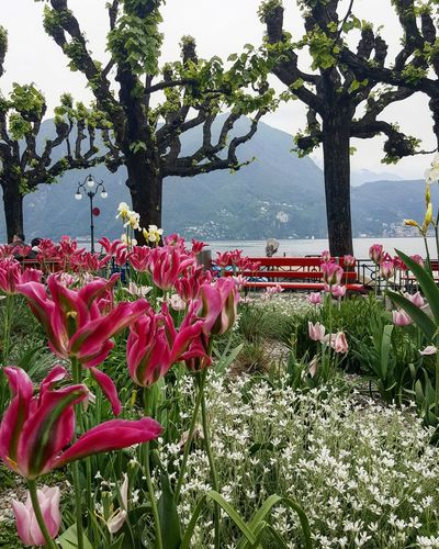 Flowers Garden Lugano Streetphotography Travel