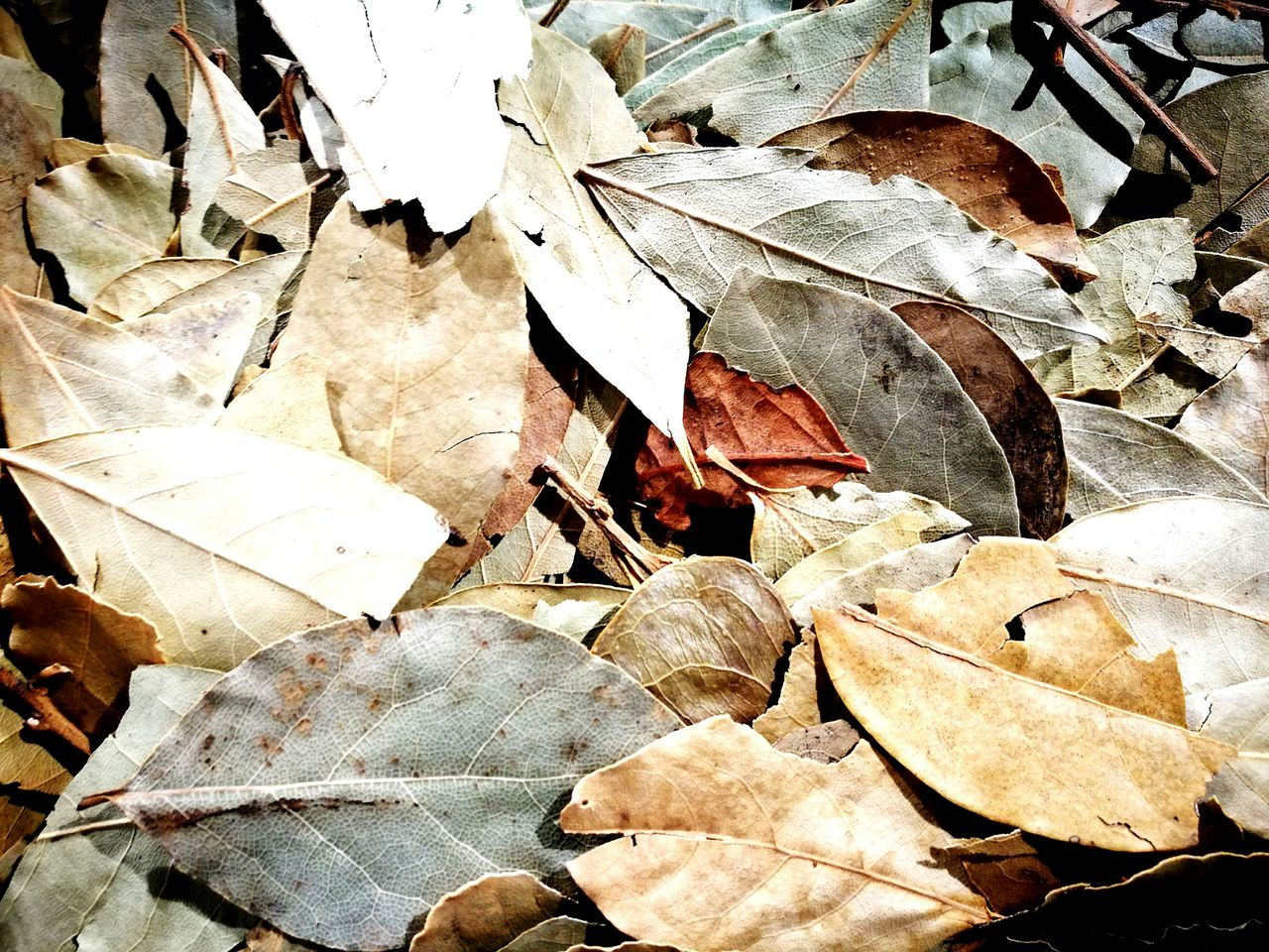 leaf, autumn, change, nature, day, outdoors, abundance, no people, large group of objects, fragility, close-up